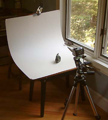 Basic eBay Photo Setup